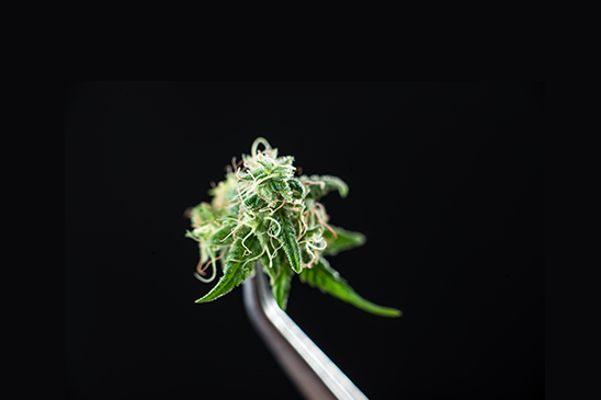 Things to Consider When Investing in Marijuana